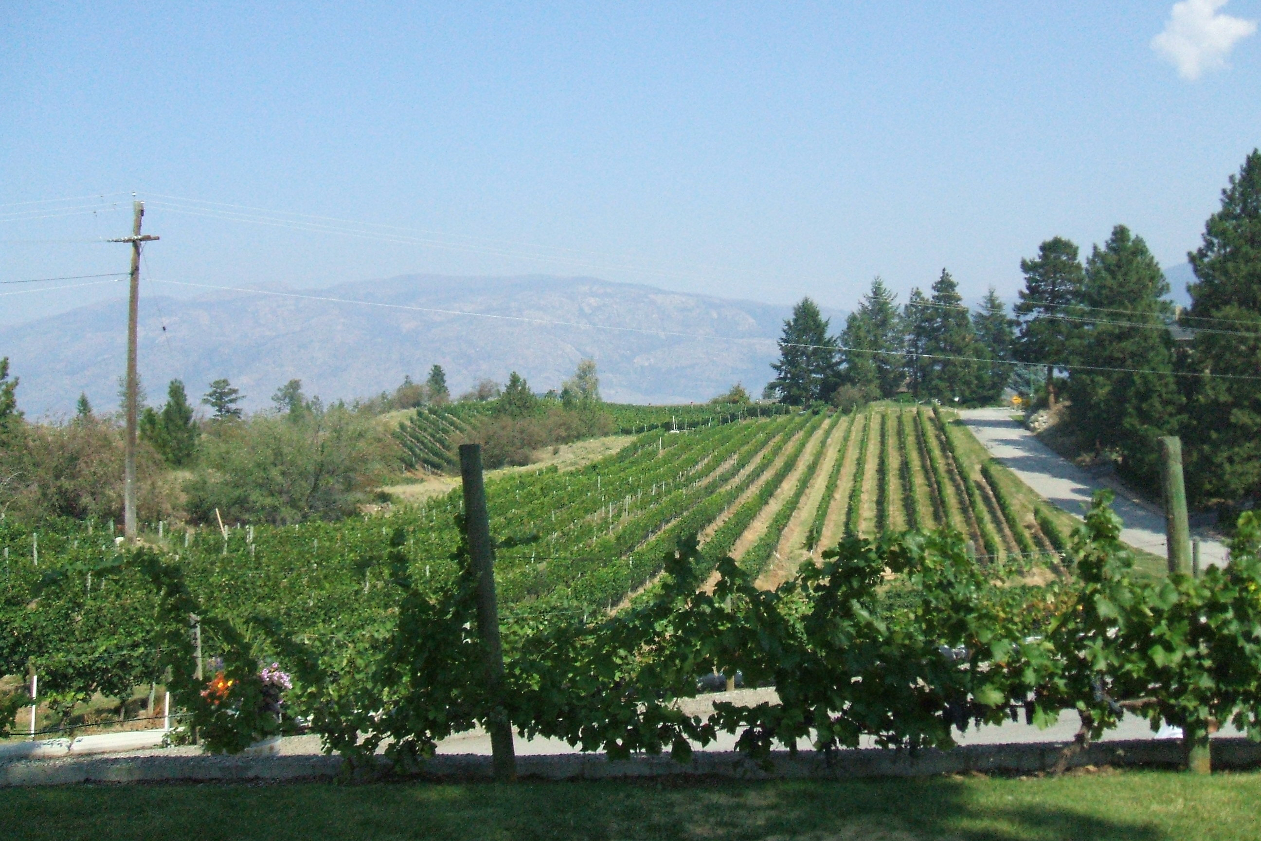 Home Slider Vineyard 1